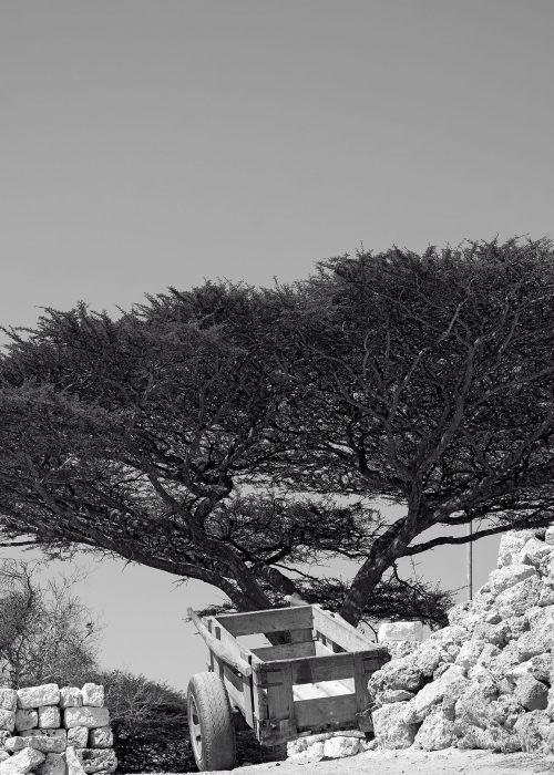 TREE OF LIFE-bloom